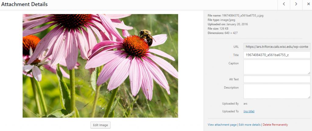 File Detail Screen